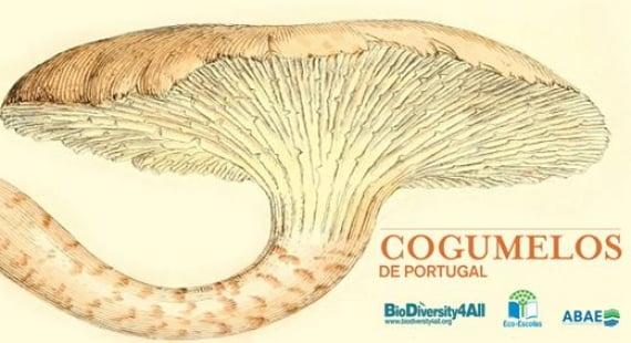 logocogumelos